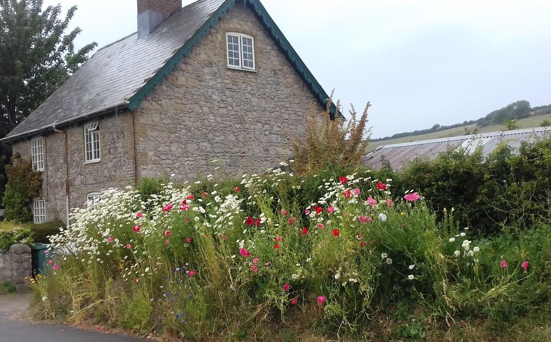 2020 Bowcombe cottage flowers cropped resized.jpg
