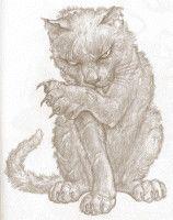 3c1873e8ddaed44fb36afd3f58a00856--terry-pratchett-discworld-cat-lady.jpg
