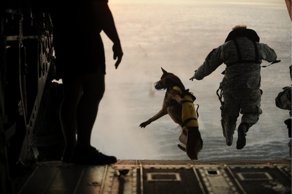 a_dog_military.jpg