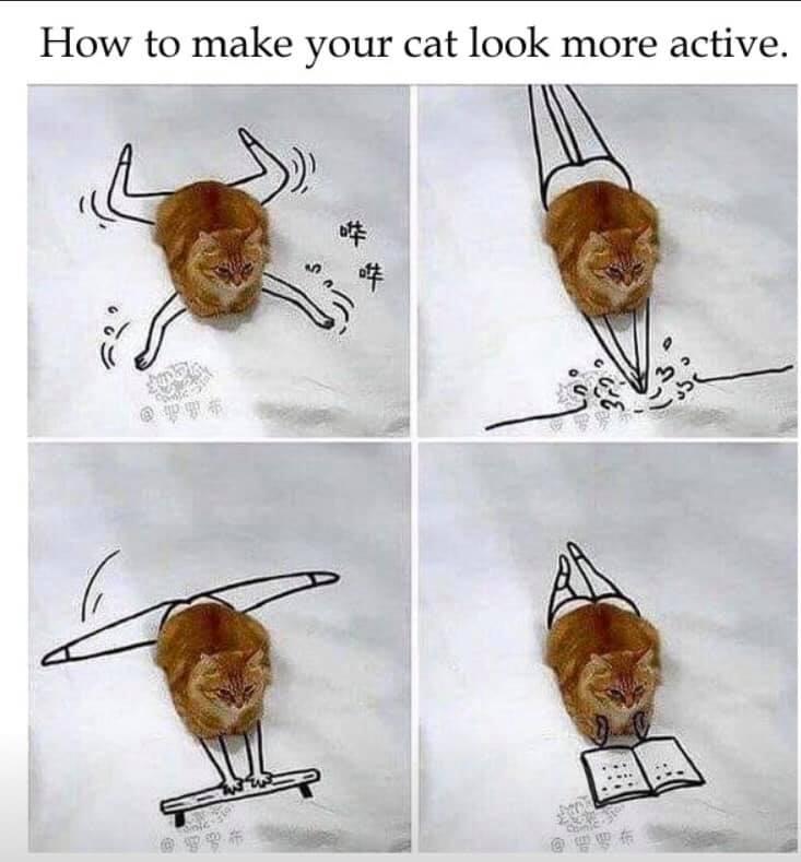 active cat.jpg