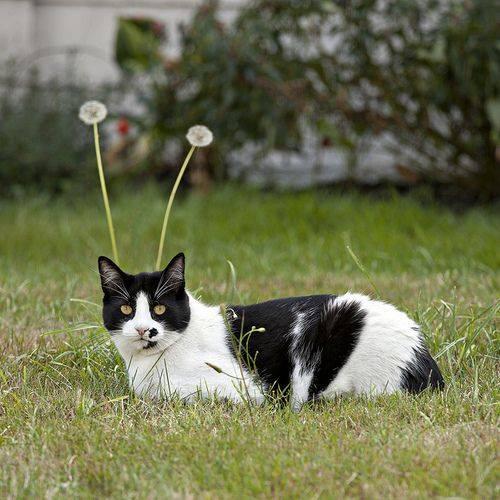 alien cat.jpg