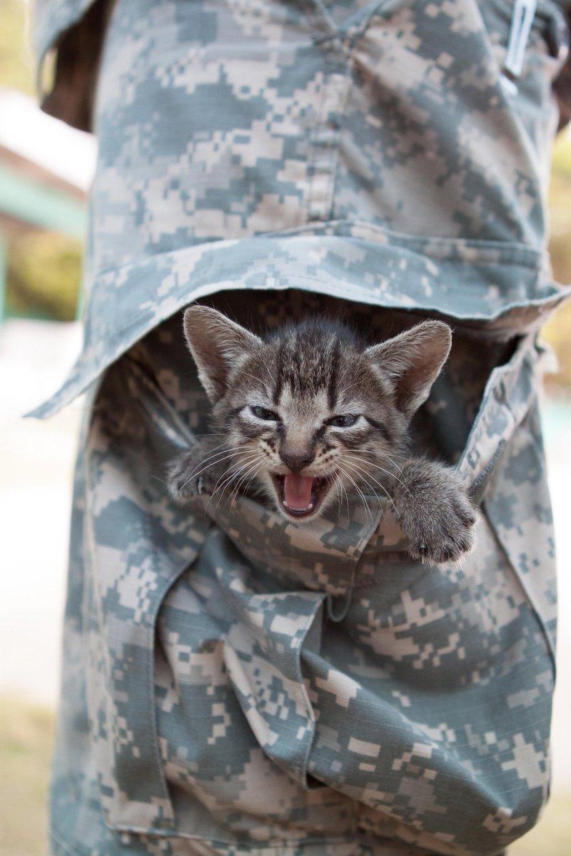 Battle cats.jpg