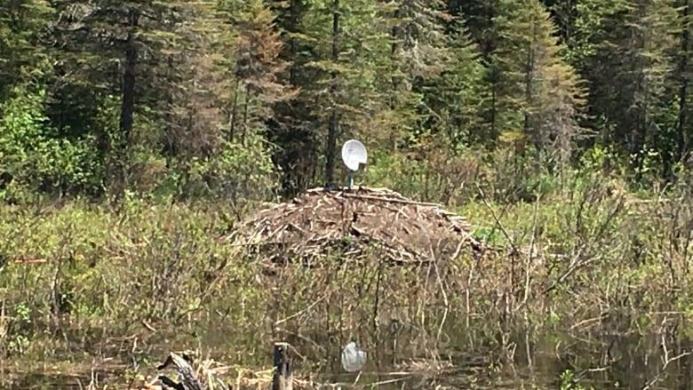 beavers-with-satellite.JPG