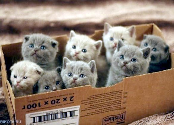 Box of Kittens 1.jpg