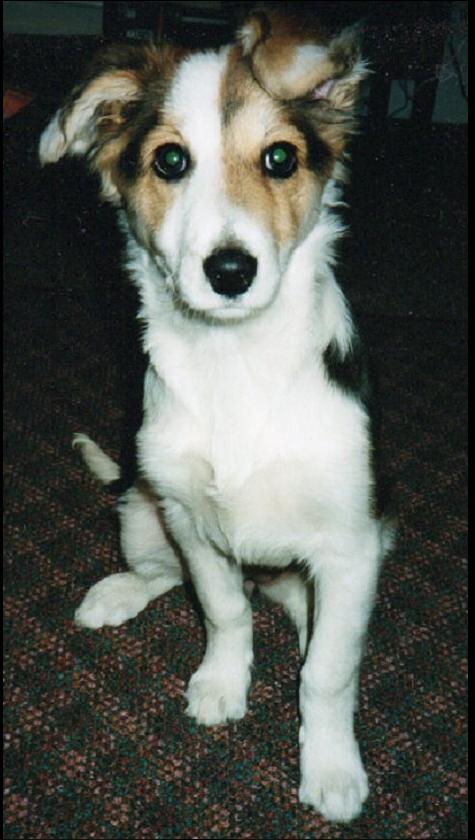 Capture dog.PNG