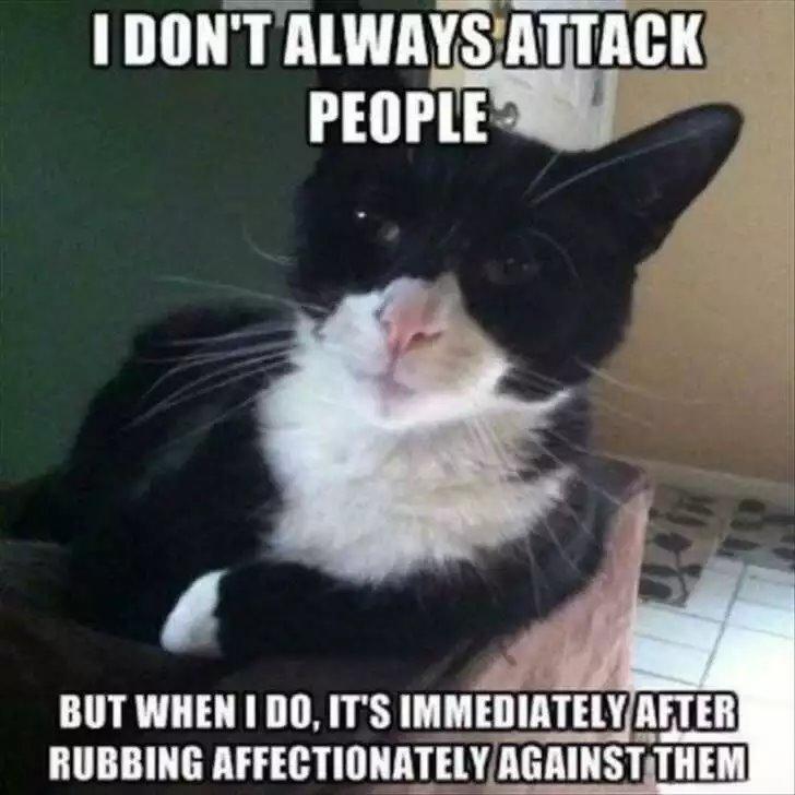 cat attack.jpg