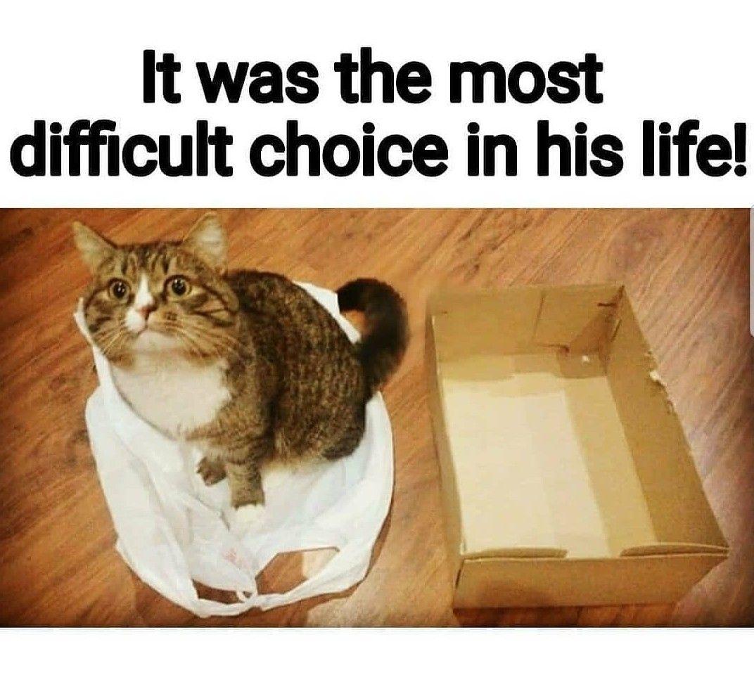 cat choice.jpg