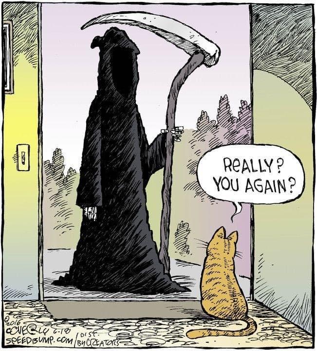 cat death.jpg