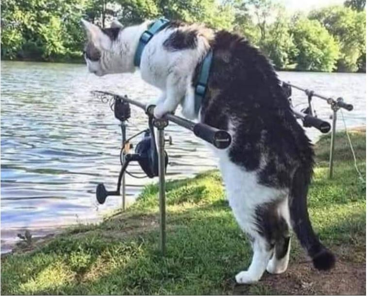 Cat fishing for cat fish.JPG