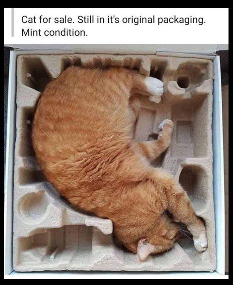 cat for sale.jpg