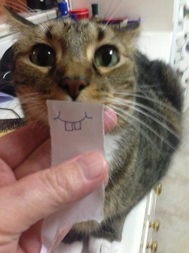 cat funnyface 1.jpg