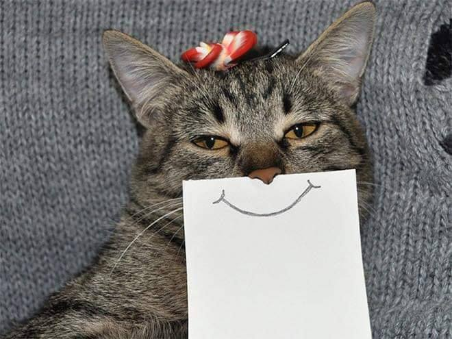 cat funnyface 2.jpg