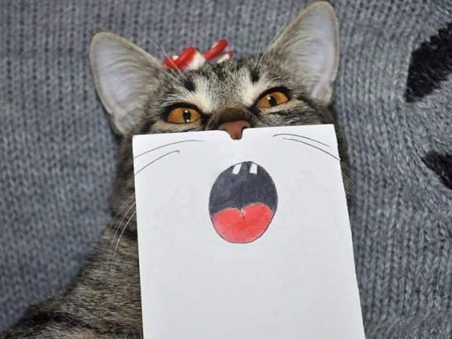 cat funnyface 3.jpg