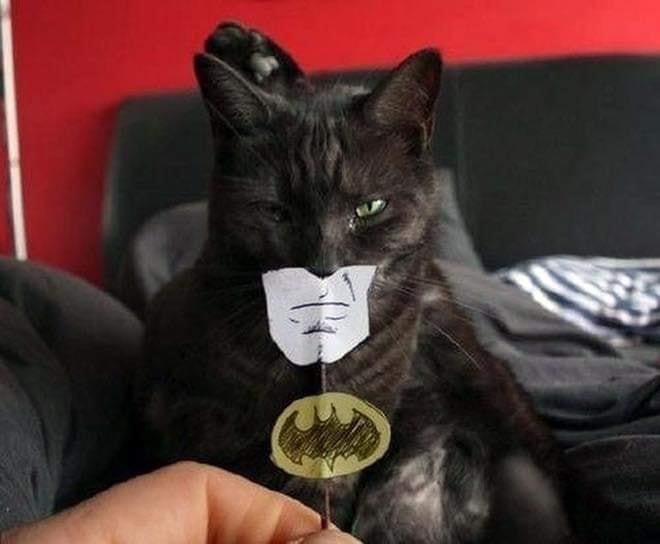 cat funnyface 4.jpg