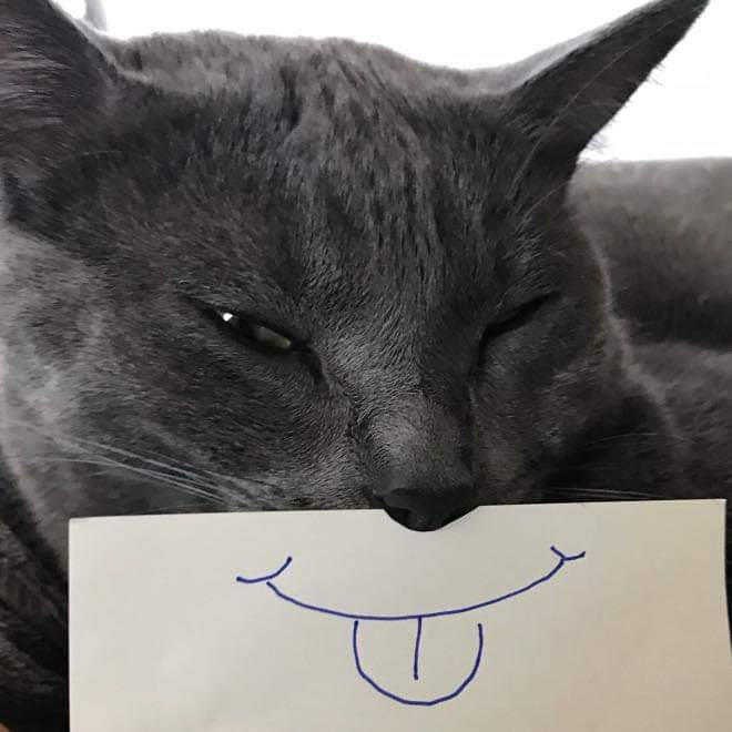 cat funnyface 6.jpg
