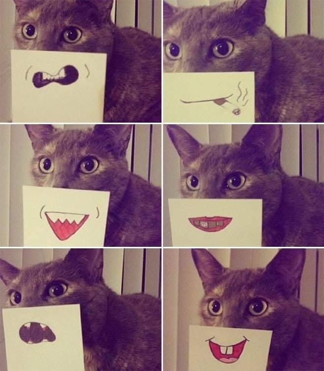 cat funnyface 7.jpg