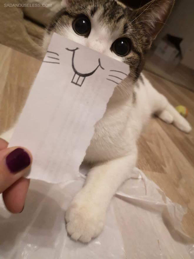 cat funnyface 8.jpg
