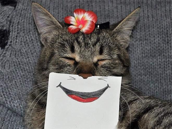 cat funnyface 9.jpg