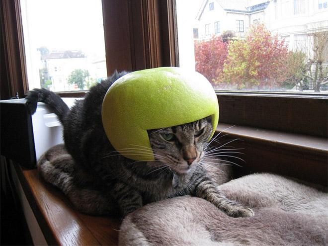cat-helmet1.jpg