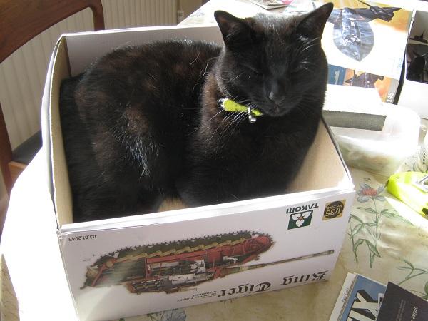 cat in a Tiger box.jpg