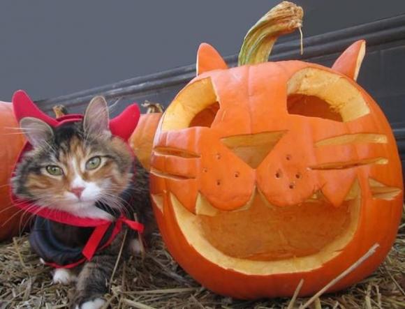 Cat in Devil Costume woth pumpkin.jpg