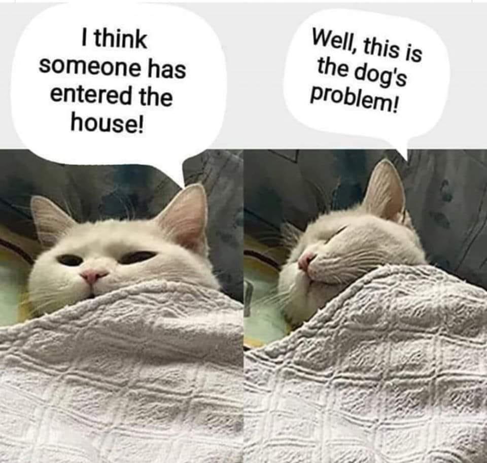 cat intruder alert.jpg