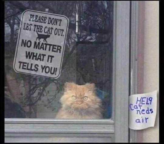 Cat lies.jpg