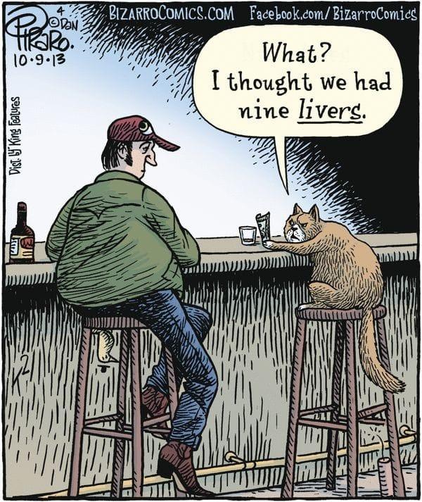 Cat nine livers.jpeg