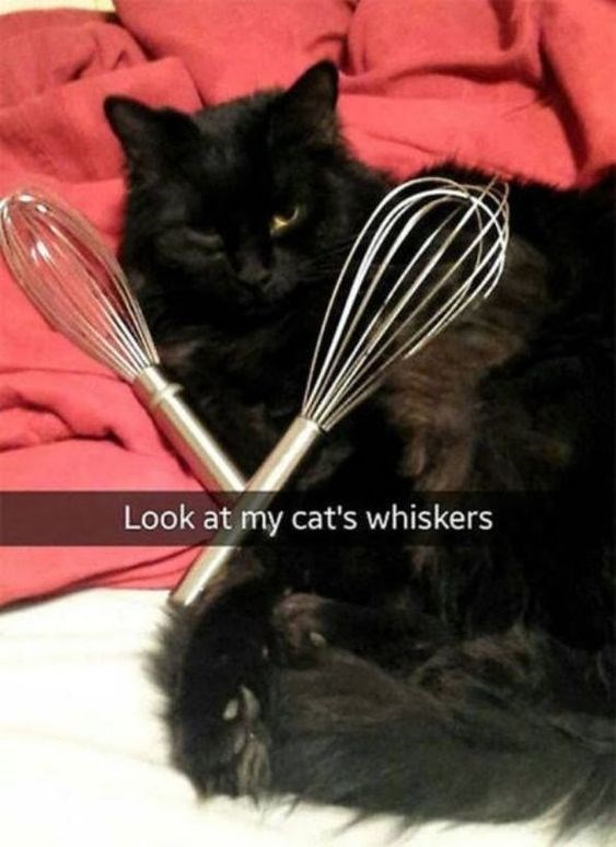 cat-pun-cat-look-at-my-cats-whiskers.jpeg