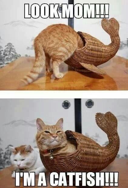 cat-pun-cat-lookmom-ima-catfish.jpeg