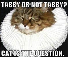 cat-pun-cat-tabby-or-not-tabby-catas-the-question.jpeg
