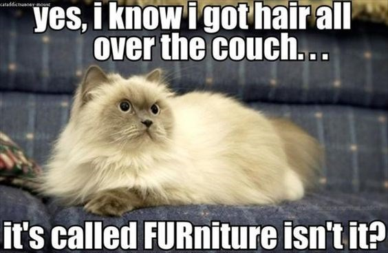 cat-pun-cat-yes-i-know-igot-hair-all-over-the-couch-sataddistasoarmosc-its-called-furniture-i...jpeg