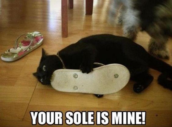 cat-pun-footwear-your-sole-is-mine.jpeg