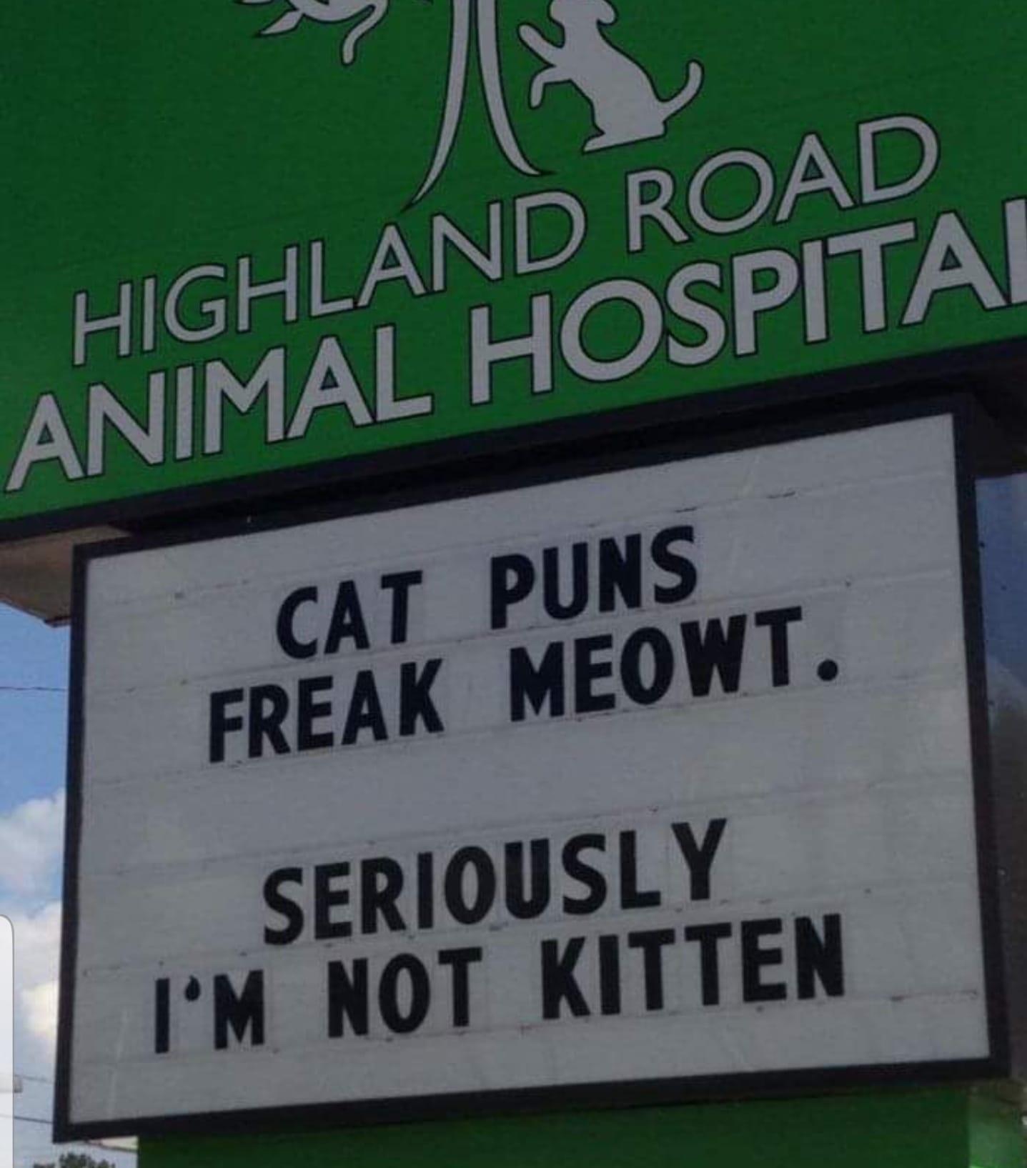 cat puns.jpg