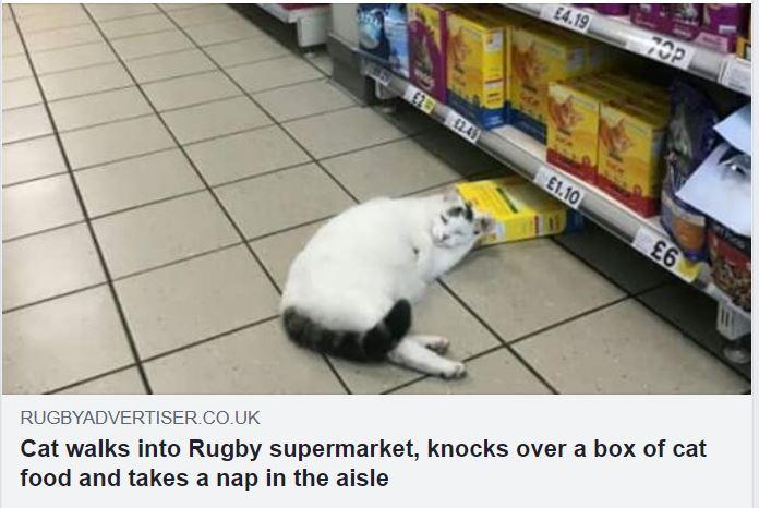 cat rugby.JPG