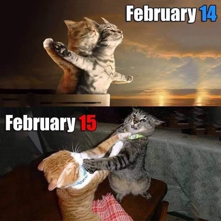 cat valentine.jpg