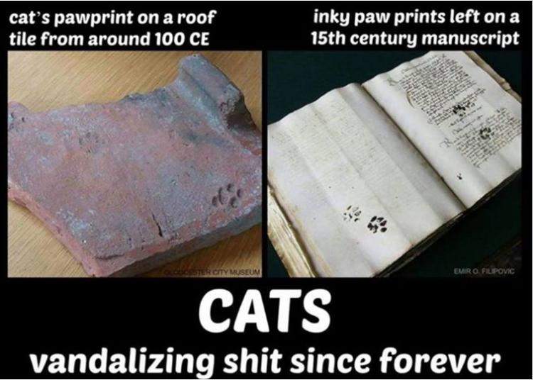 cat vandals.PNG