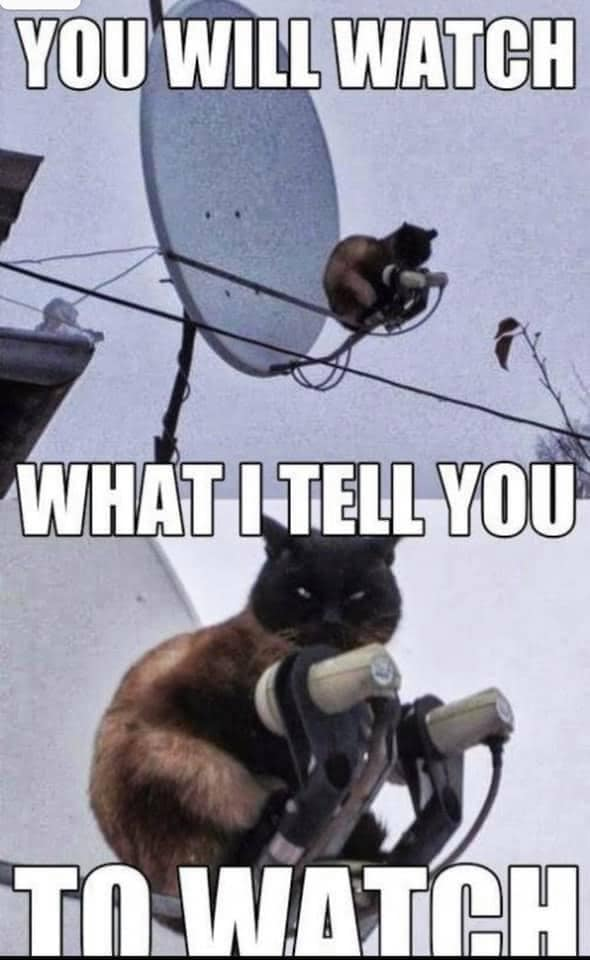cat watch what I tell you.jpg