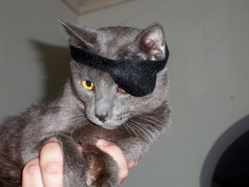 Cat with pirate eye patch.jpg