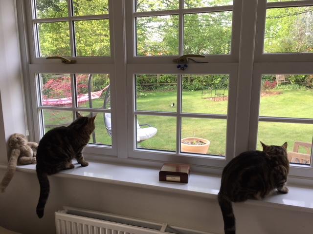 cats and bird.JPG