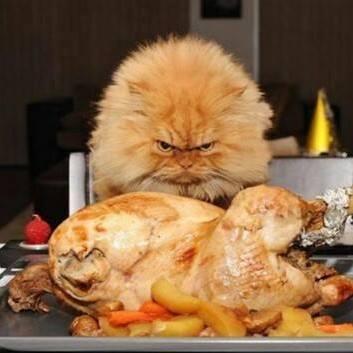 cats dinner.jpg
