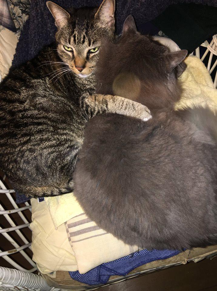 CatsChair.jpg