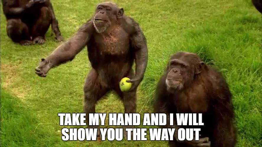 Chimp will show you the way.jpg