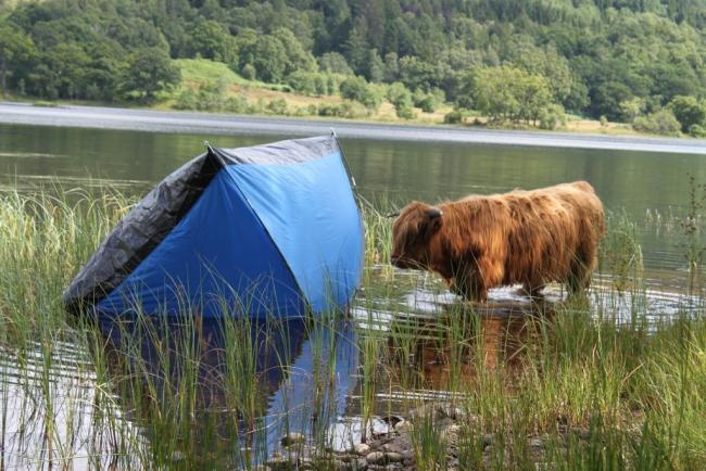 Coo Tent Perthshire.jpg