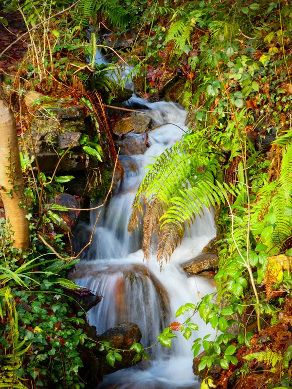 Craig Gwladys Country Park (1).jpg