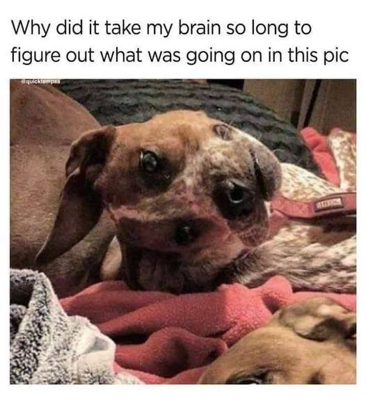 dogs head.jpg