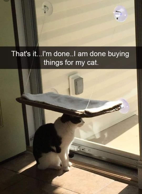 done cat.jpg
