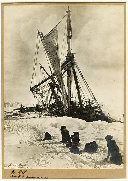 Endurance, dogs 1915.jpg