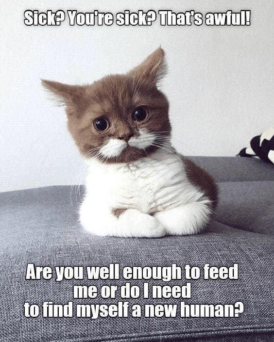 feed cat.jpg