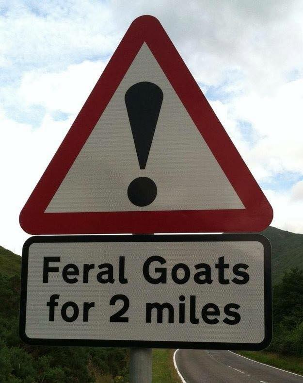 feral_goats.jpg